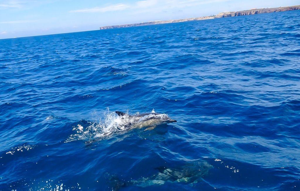 Algarve en famille : où voir des dauphins en liberté ?