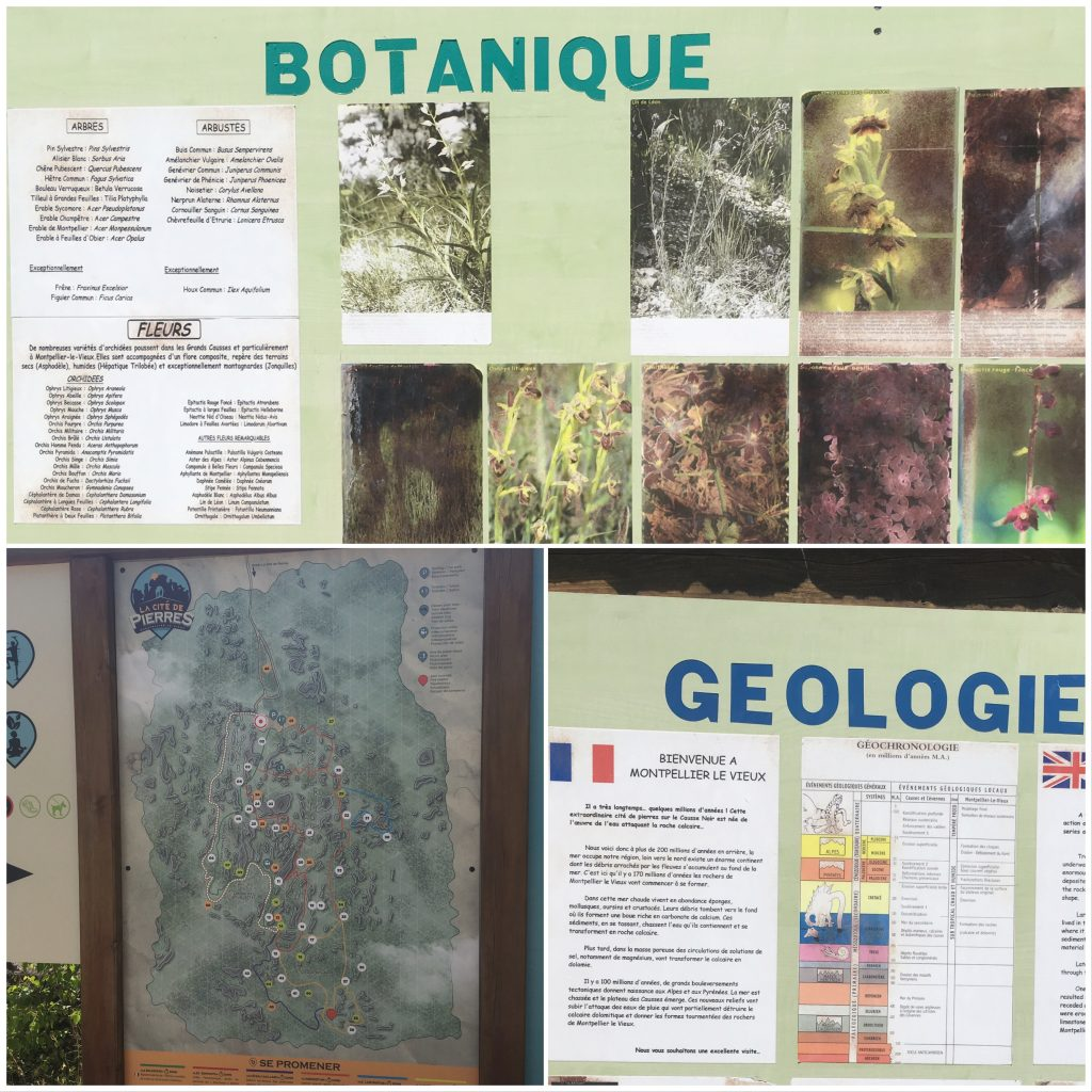 Montpellier le vieux zone riche en faune et en flore