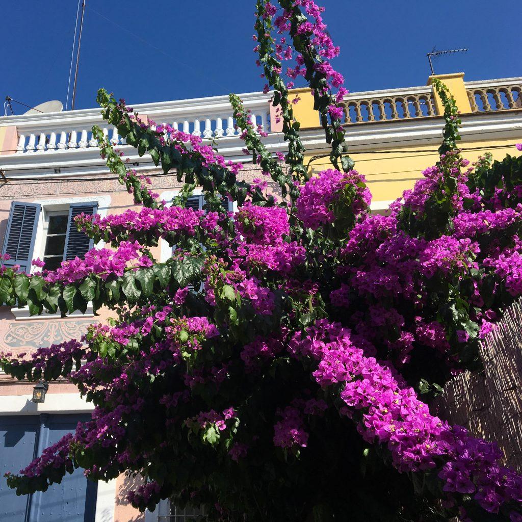 Costa Maresme : à la découverte d' El Masnou. Le village