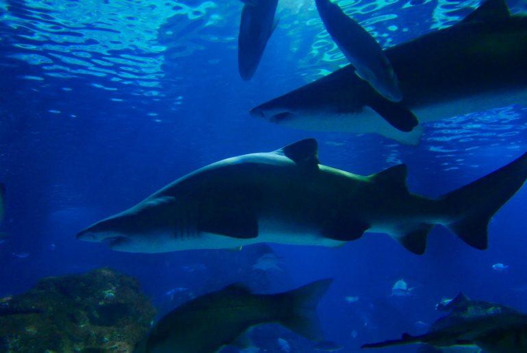 Aquarium de Barcelone en famille