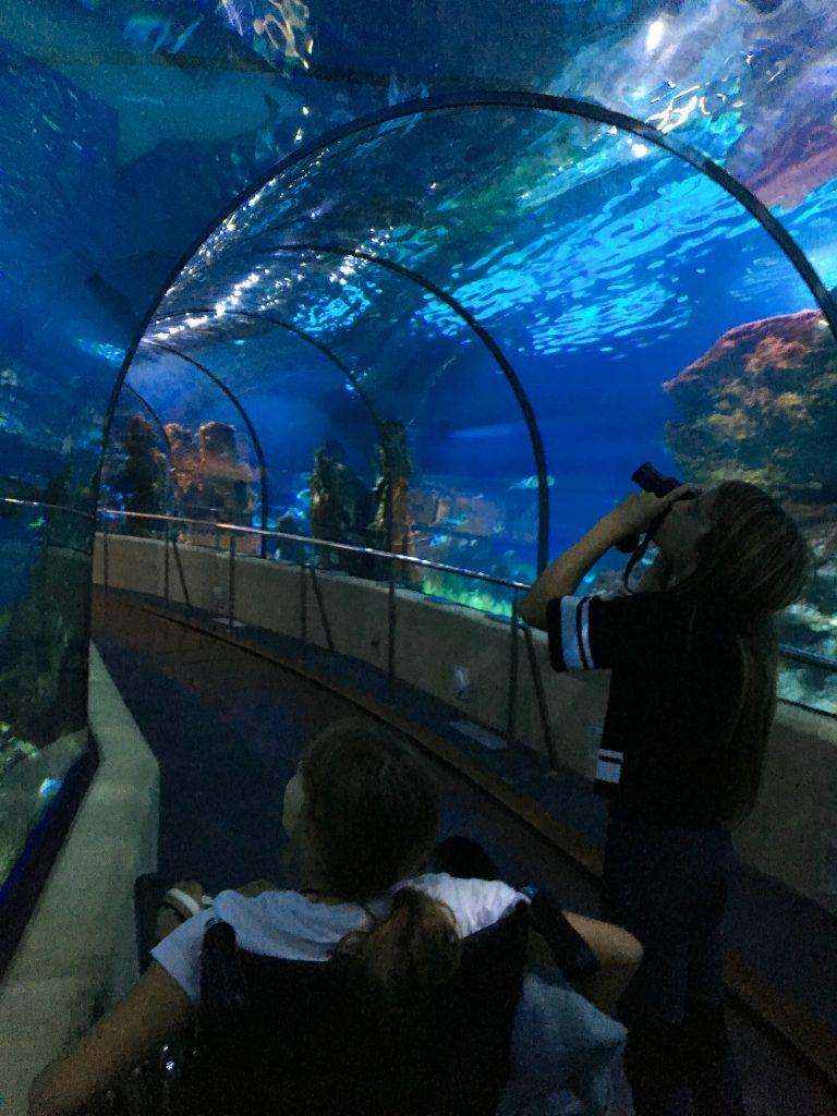 Tunel aux requins
