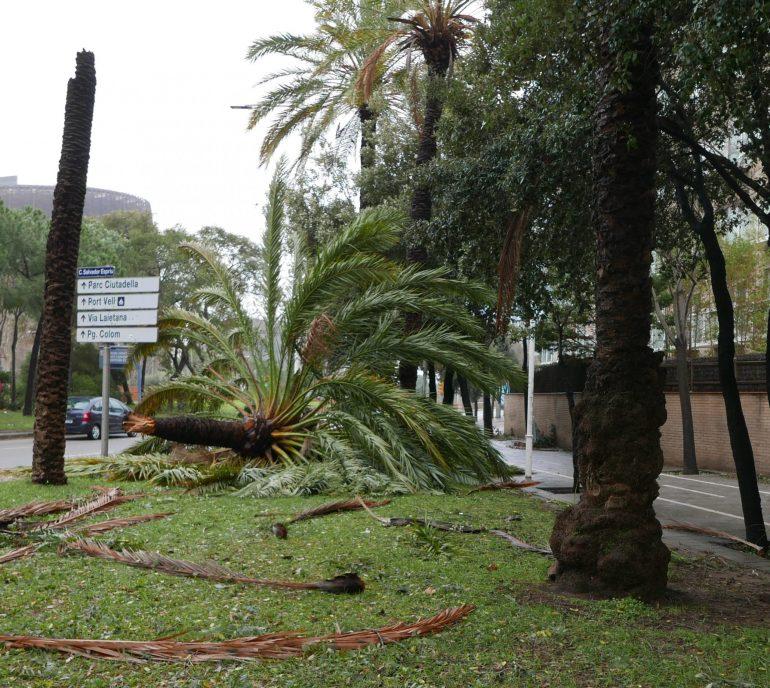 Tempête Gloria : palmier à terre